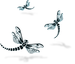 Image of dragonflies