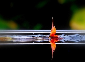 Image of a leaf on water
