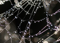 Image of a droplets on a web
